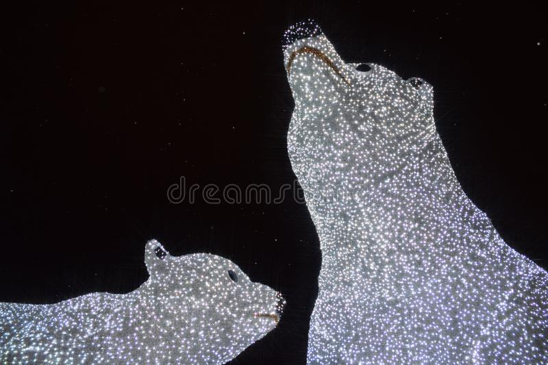 Illumination d'ours blancs photographie stock libre de droits