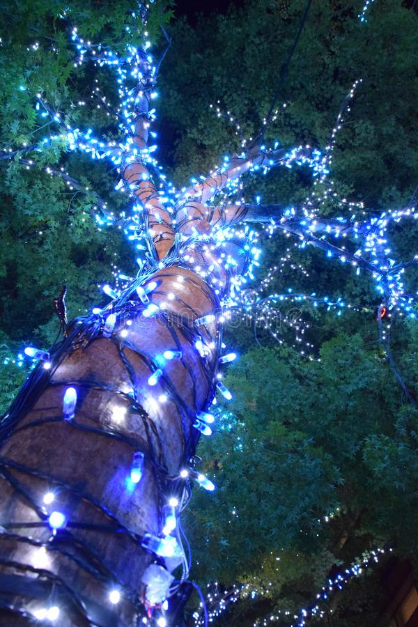 Illuminations of big tree wrapped by led lights for christmas fe. Stival in park royalty free stock image