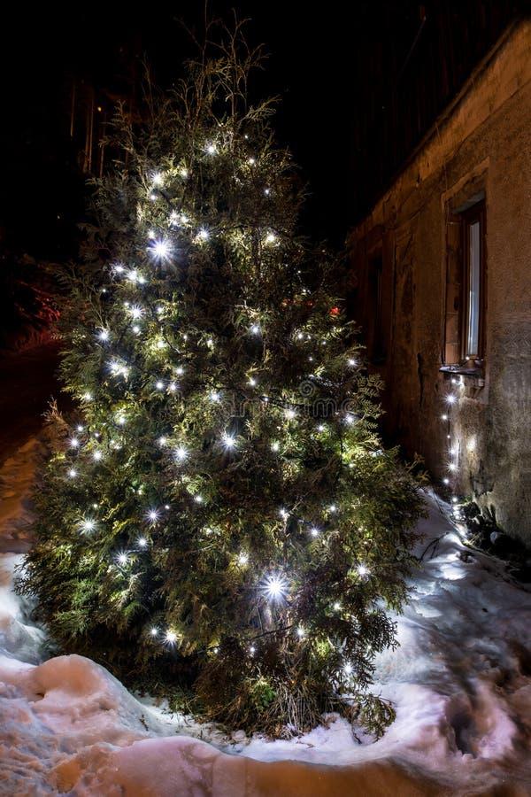 Illuminazione illuminata dell'albero di natale nel giardino di inverno immagini stock libere da diritti