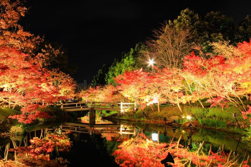 Illuminazione a Nabana nessun Sato, il Mie, Giappone, con le foglie di autunno attraenti fotografie stock