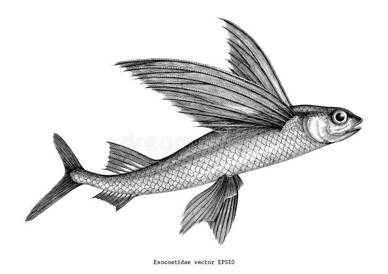 Illust del grabado del vintage del dibujo de la mano del Exocoetidae o del pez volador stock de ilustración