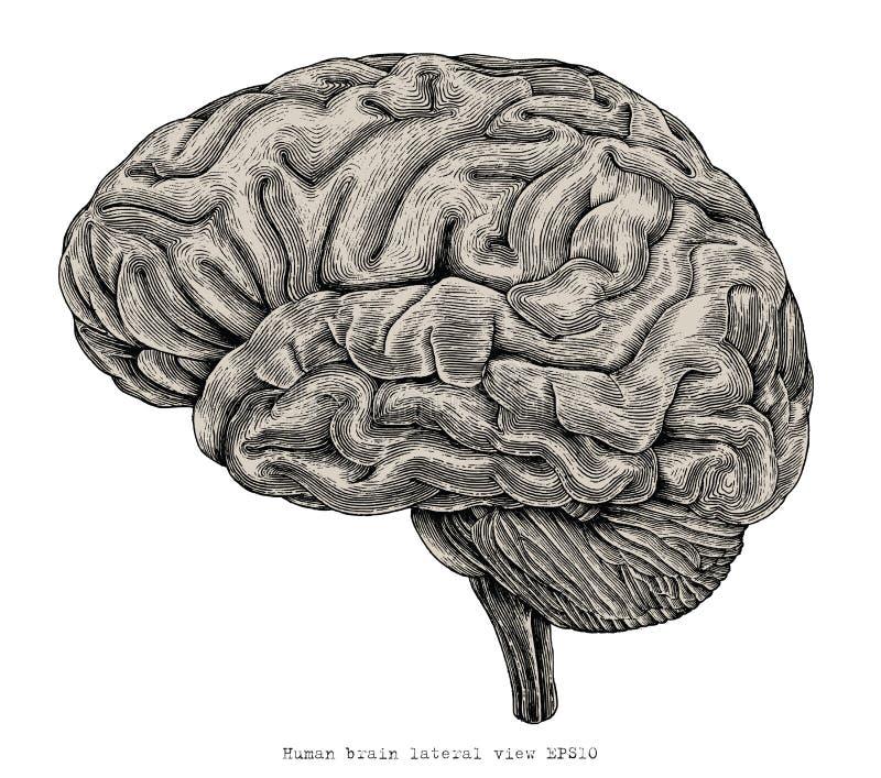 Illustra d'annata dell'incisione di vista del cervello umano del disegno laterale della mano royalty illustrazione gratis