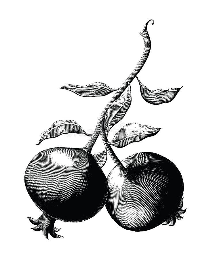 Illustra för gravyr för tappning för teckning för hand för granatäpplefruktfilial stock illustrationer