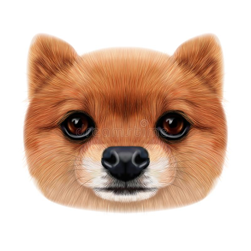 Illustrated face of Pomeranian Spitz Dog. stock photos