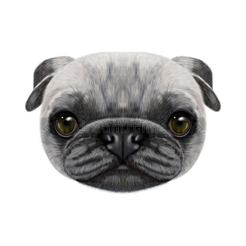Illustrated face of Pug Dog. royalty free stock photos