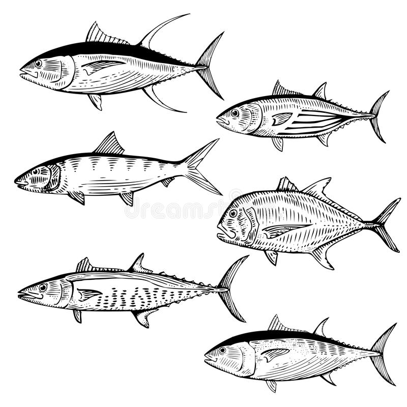 Free Illustrated Fish Royalty Free Stock Photos - 36327308