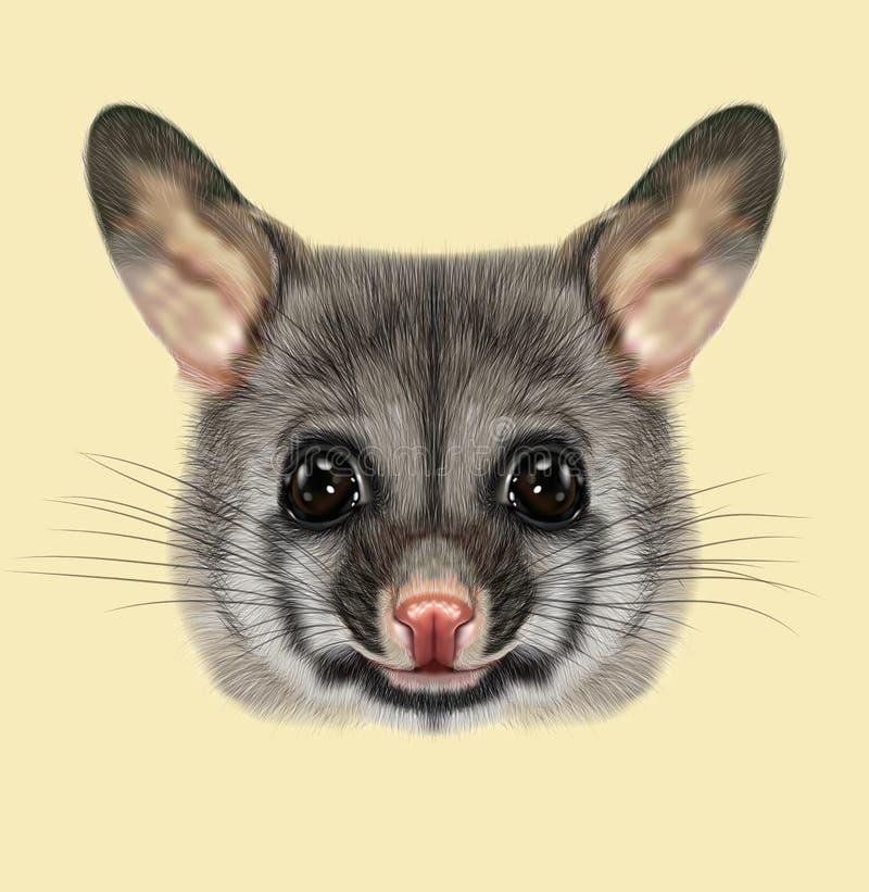Illustrated Portrait Of Common Brushtail Possum Stock ...