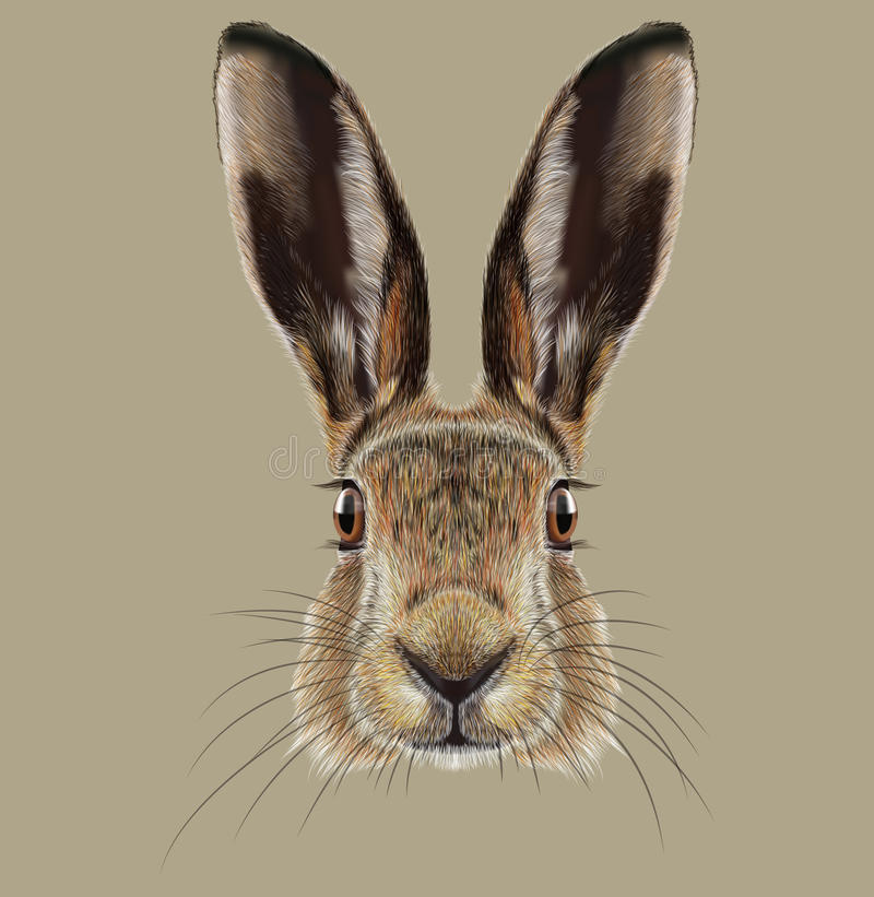 Illustrated Portrait of Hare royalty free stock images