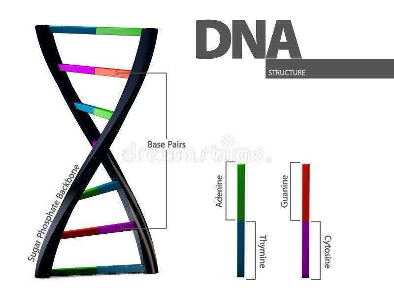 Illustratie chemische structuur van DNA op witte achtergrond vector illustratie