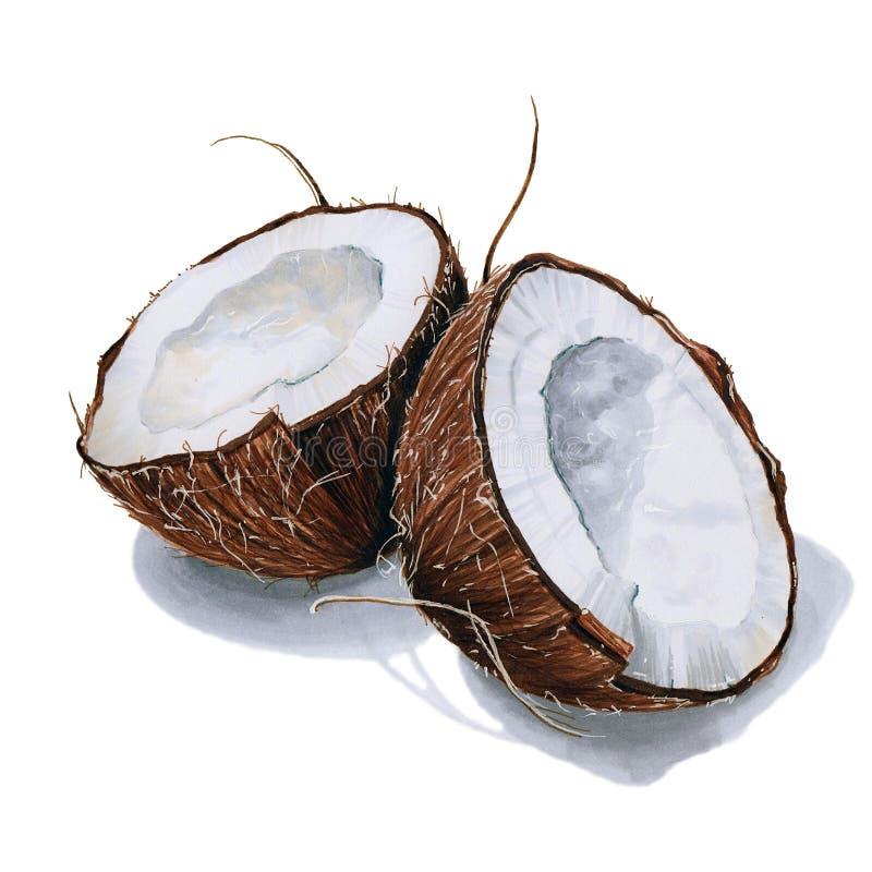 Illustratie met kokosnoot royalty-vrije stock afbeeldingen
