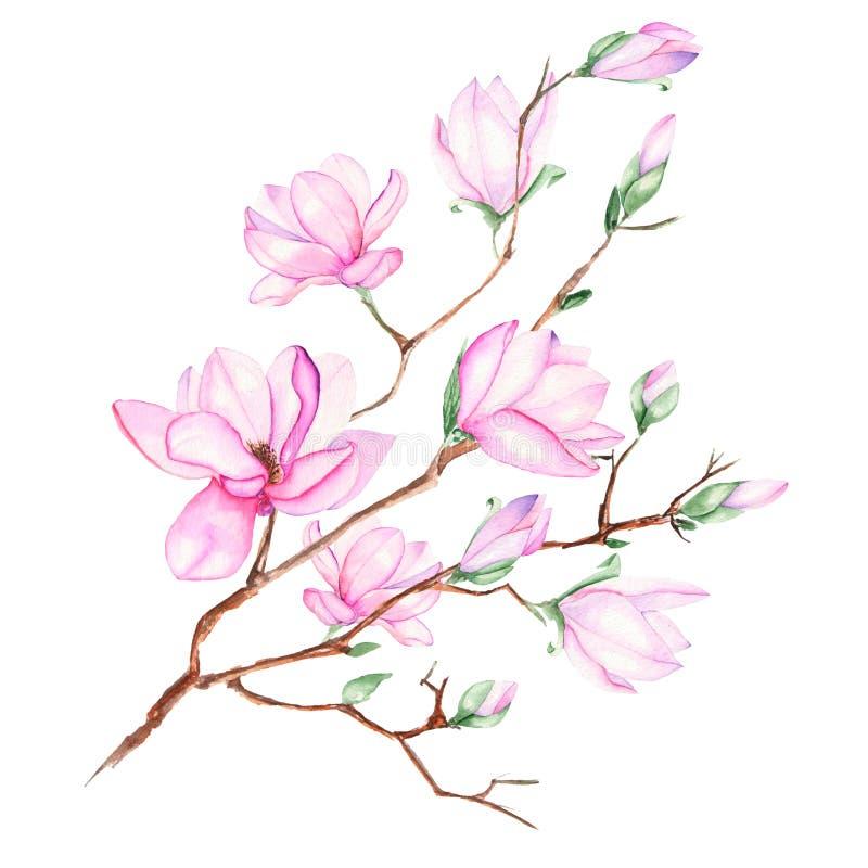Illustratie met magnoliatak stock illustratie