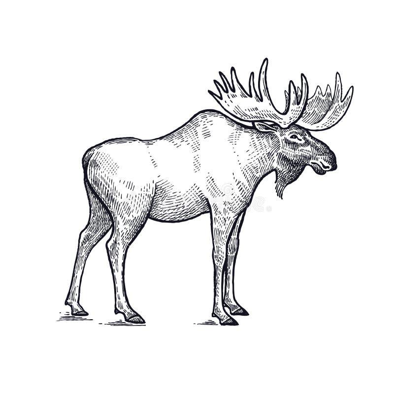Illustratie van Amerikaanse elanden de bosdieren vector illustratie