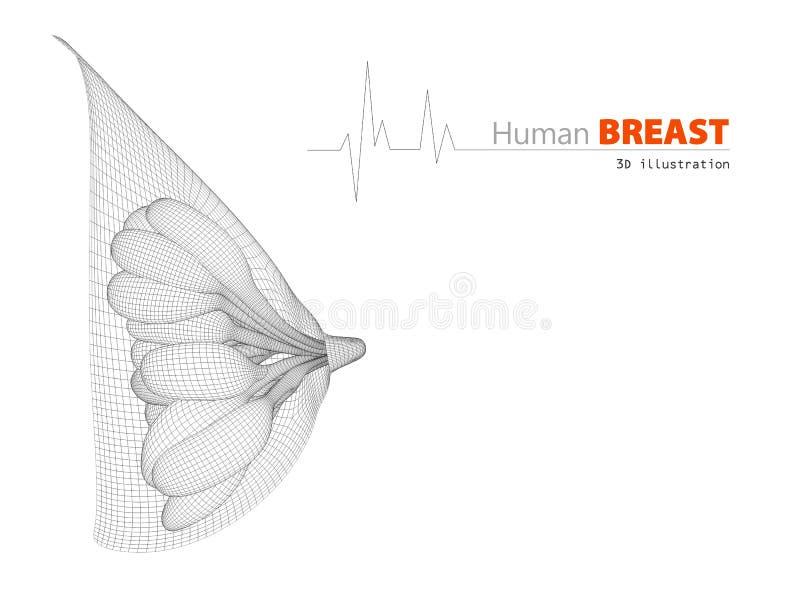 Illustratie van anatomie de vrouwelijke borst op witte achtergrond vector illustratie