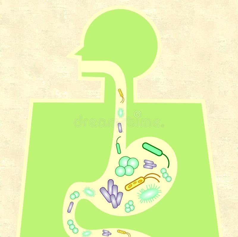 Illustratie van darm microbiome royalty-vrije illustratie