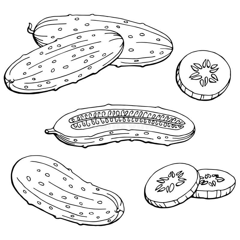 Illustratie van de komkommer de grafische zwarte wit geïsoleerde schets stock illustratie