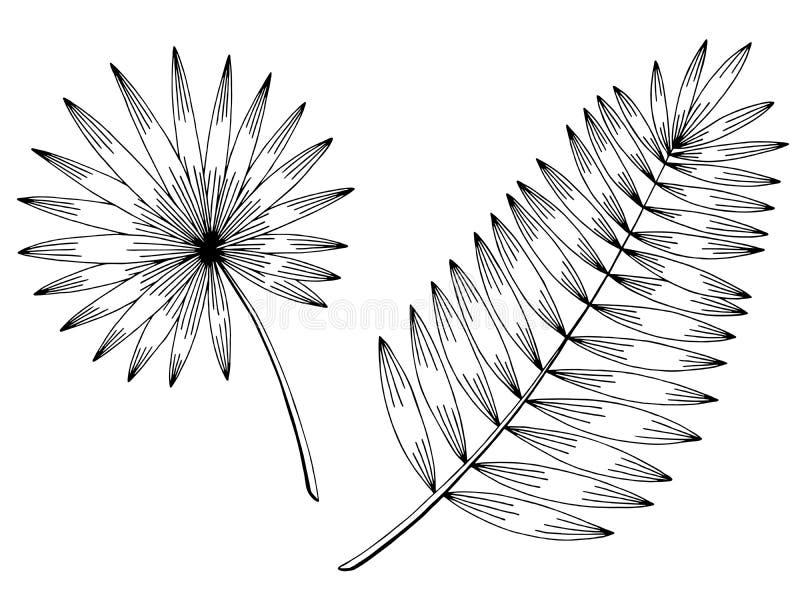 Illustratie van de palmblad de grafische zwarte wit geïsoleerde schets vector illustratie