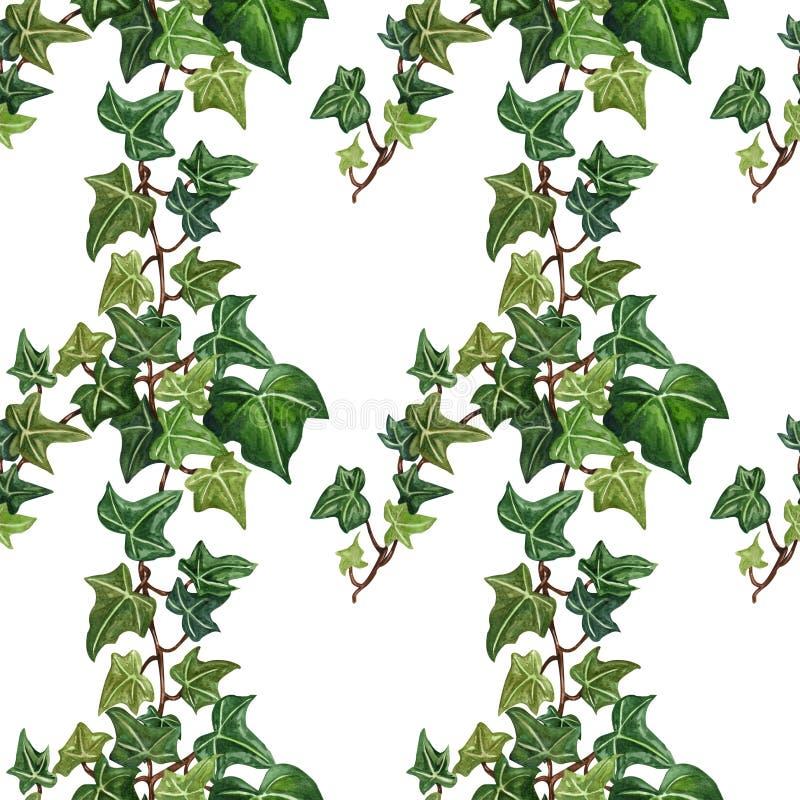 Illustratie van de waterverf de naadloze botanische klimop Botanisch naadloos patroon van klimoptakje stock illustratie