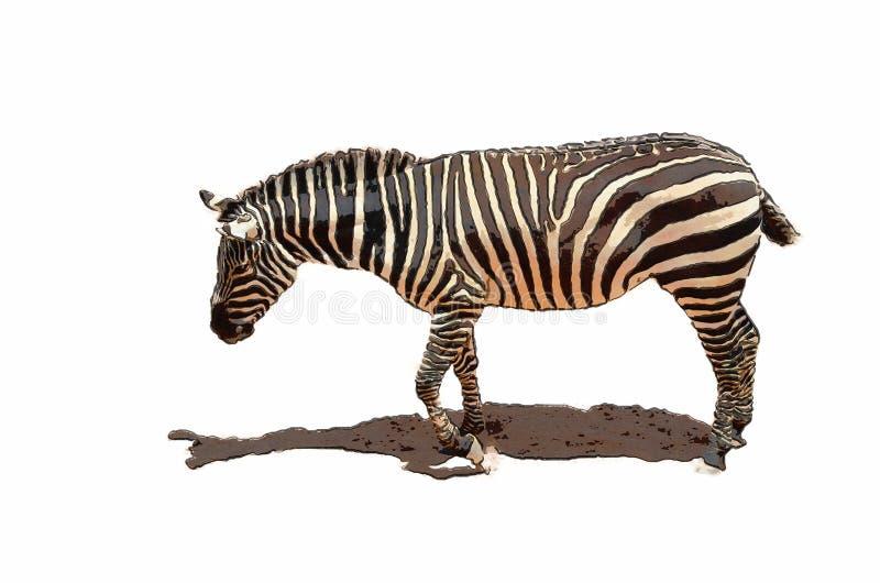 Illustratie van een Afrikaanse Zebra stock foto