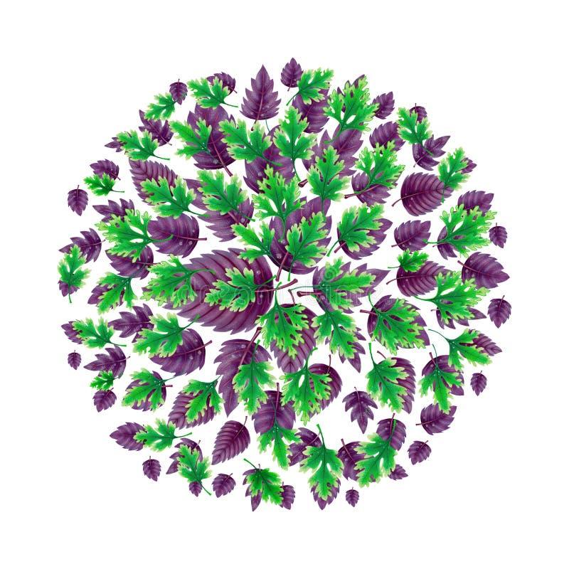 Illustratie van een Bal van Basilicum en peterseliebladeren vector illustratie
