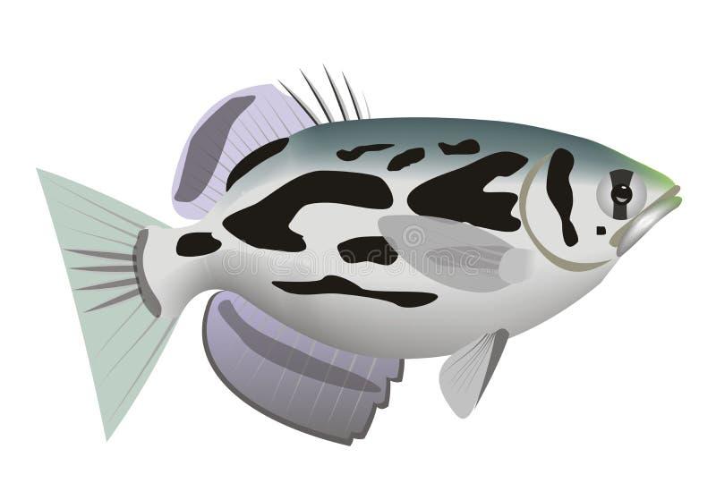 Illustratie van een betrokken archerfish Toxotes-blythii stock illustratie