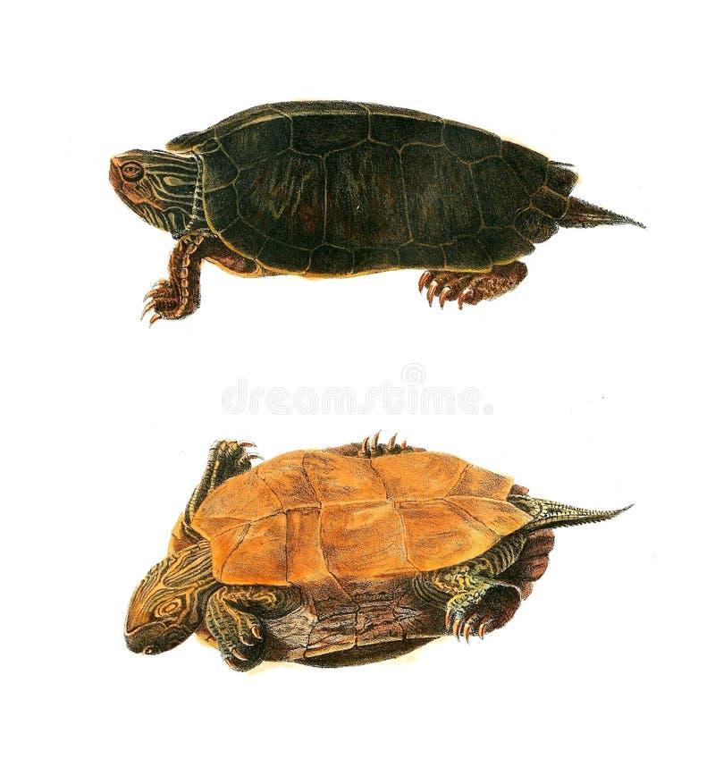 Illustratie van een dier royalty-vrije illustratie