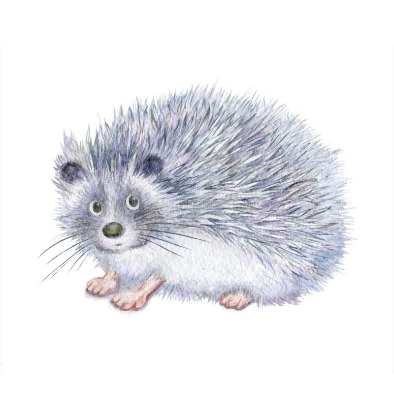 Illustratie van een egel, waterverf vector illustratie