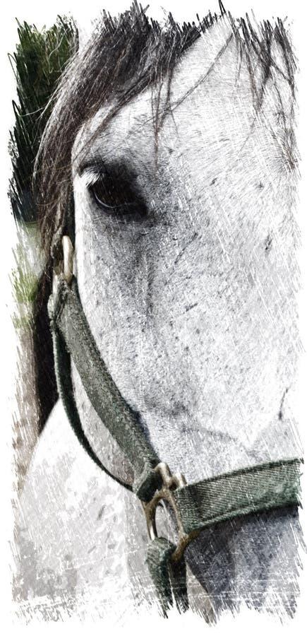 Illustratie van een grijs Paard royalty-vrije stock foto