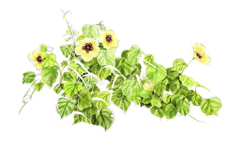 Illustratie van een wildflower royalty-vrije stock afbeeldingen