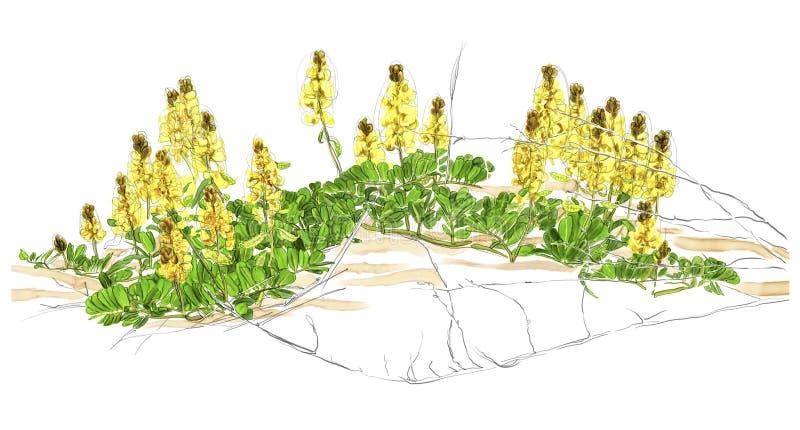 Illustratie van een wildflower royalty-vrije stock foto