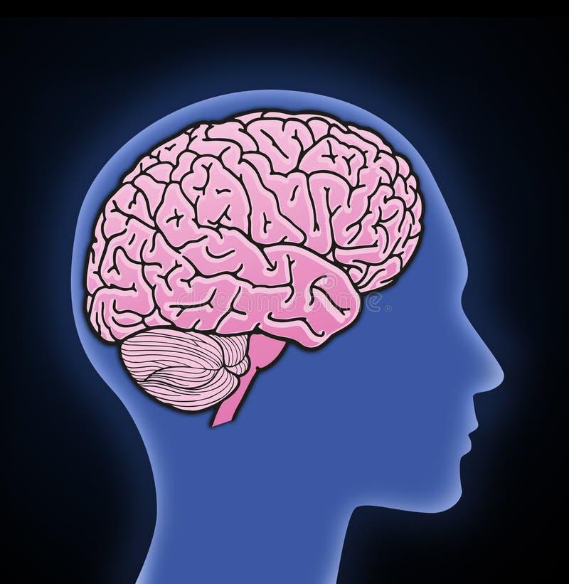 Illustratie van menselijke hersenen vector illustratie