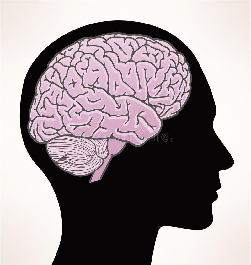 Illustratie van menselijke hersenen stock illustratie