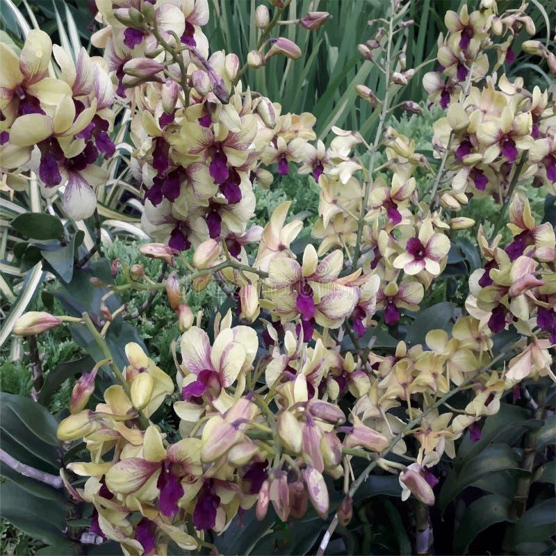 Illustratie van op romantisch en mooie orchideestruik vector illustratie