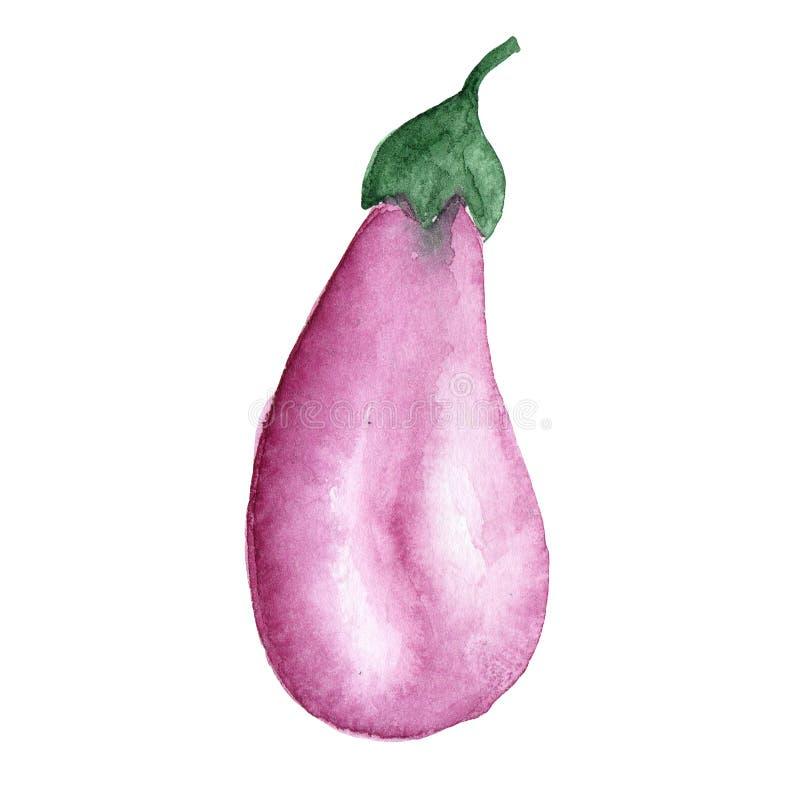 Illustratie van purple van de waterverf plantaardige aubergine op een witte achtergrond royalty-vrije illustratie