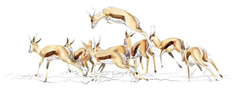 Illustratie van springbok royalty-vrije stock fotografie