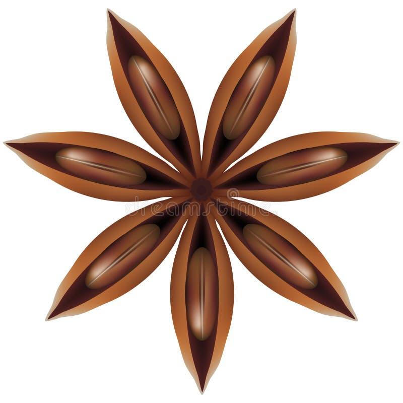 Illustratie van steranijsplant voor huisdecoratie vector illustratie