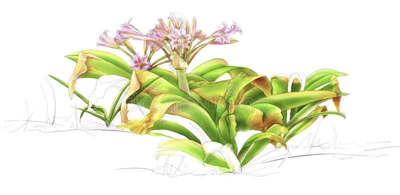 Illustratie van wildflower royalty-vrije stock foto