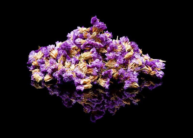 Illustratie in vector Limoniumsinuatum, statice, overzeese lavendel, het moerasrozemarijn van het inkepingsblad, overzees roze, w royalty-vrije stock afbeeldingen