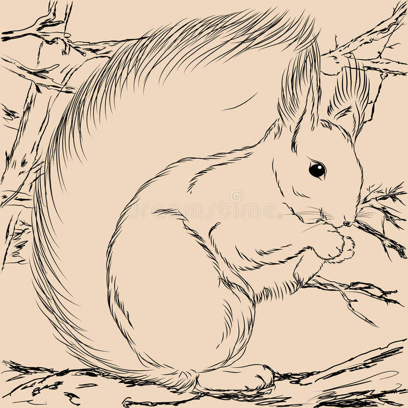 Illustratieeekhoorn Forest Wild vector illustratie