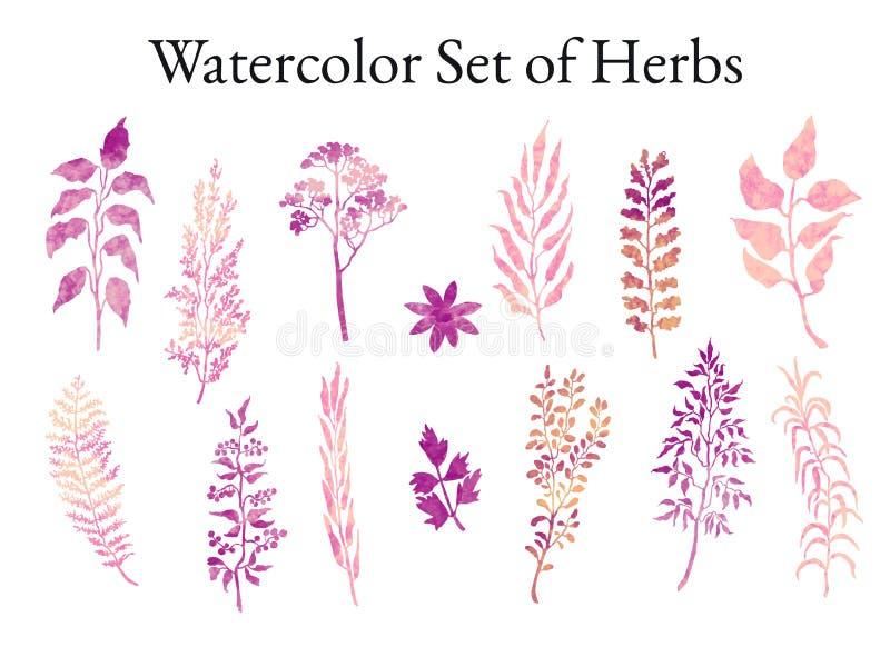 Illustratiereeks kruiden, installaties en bloemenschetsen vector illustratie
