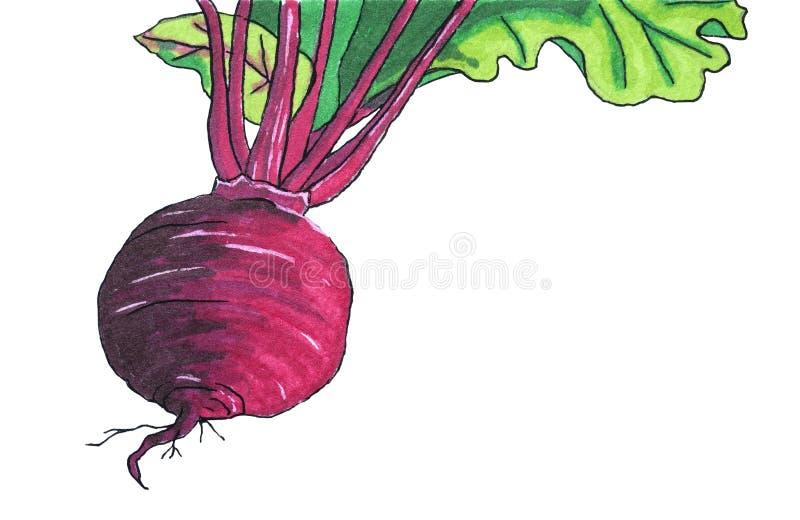 illustraties groenten Sappige bieten voor borscht royalty-vrije illustratie