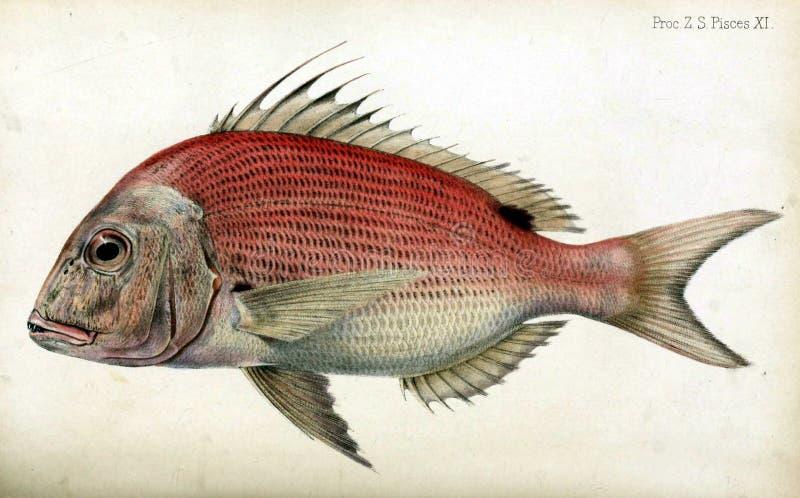 Illustraties van dier stock illustratie