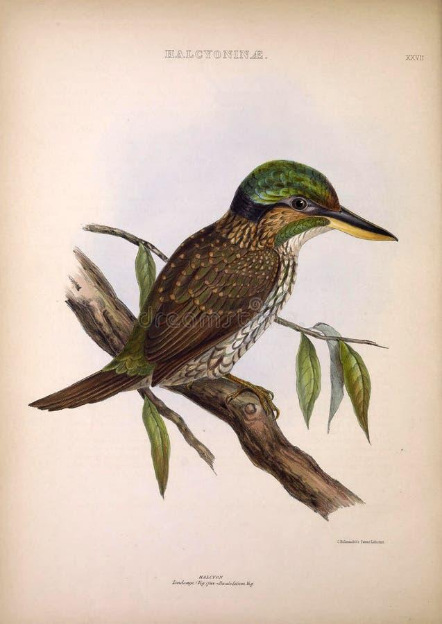 Illustraties van dier royalty-vrije illustratie
