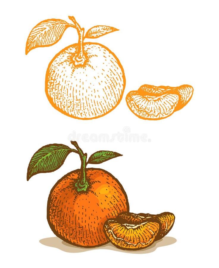 Illustraties van mandarijn royalty-vrije illustratie