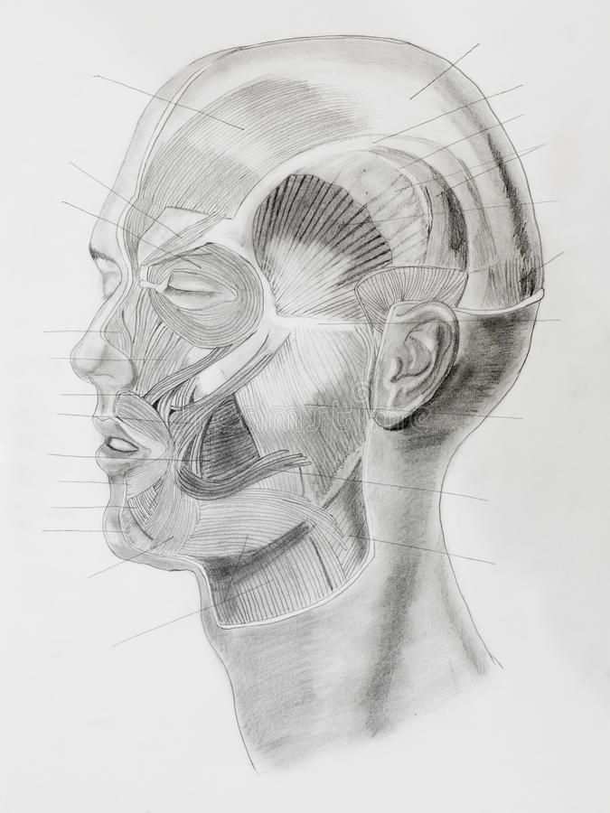 Illustratin disegnato a mano della matita, vista laterale della testa umana immagini stock libere da diritti