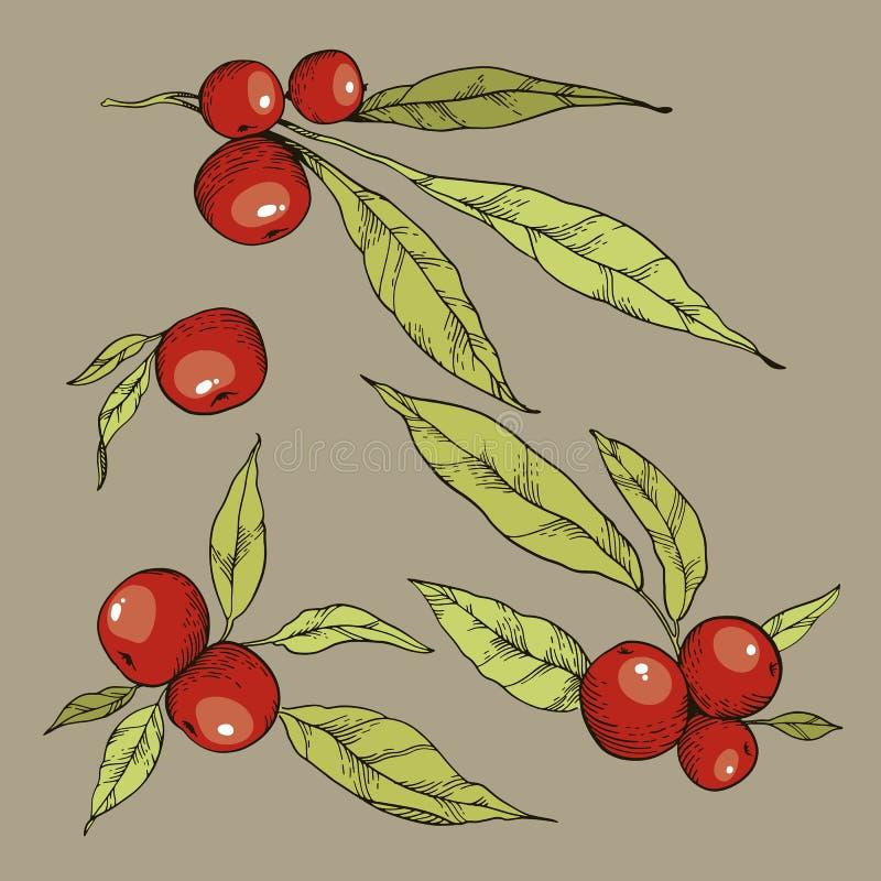 Illustratiom tiré par la main de vecteur Ensemble d'automne de feuilles et de baies rouges illustration de vecteur