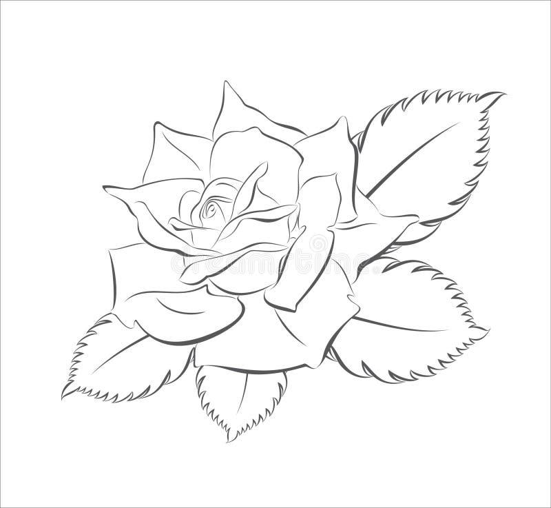 Illustration vector illustration