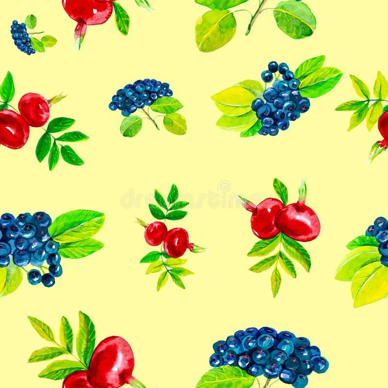 Illustration abstraite d'aquarelle des fleurs et des baies de cynorrhodon avec des feuilles et le chokeberry noir D'isolement sur illustration stock