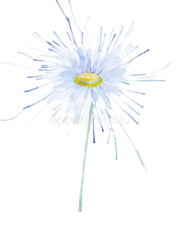 Illustration abstraite de camomille d'aquarelle D'isolement sur le fond blanc illustration libre de droits