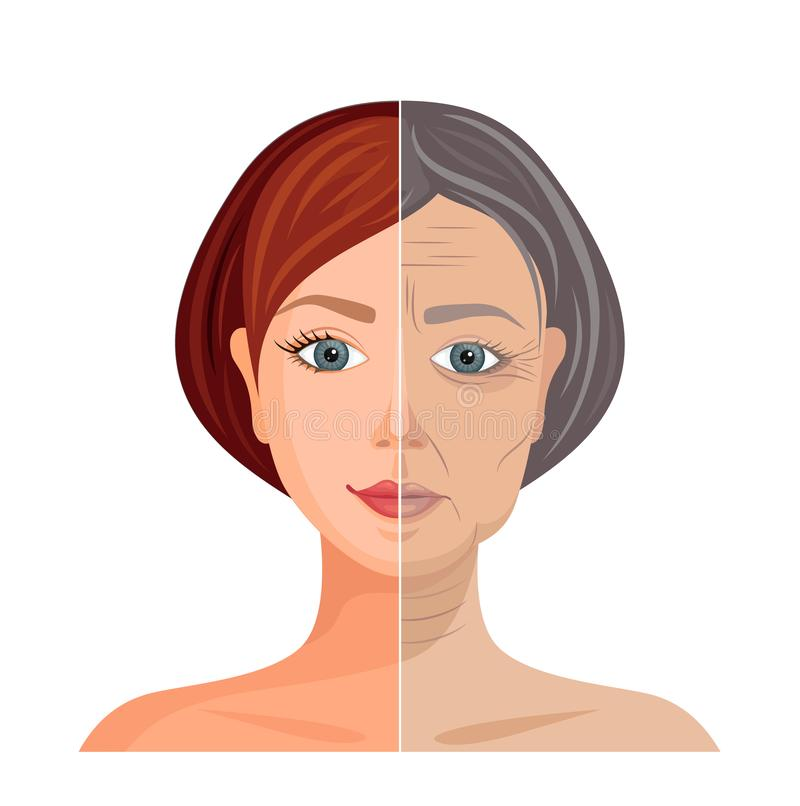 Illustration of an aging face. The process of withering skin. Vector. Aging skin. Vector illustration. Comparison of young and old faces. Before and after vector illustration