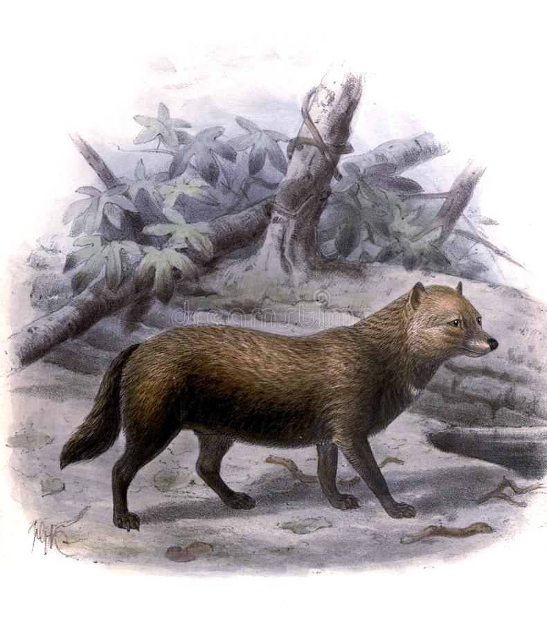 Illustration of a animal. vector illustration